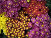 Fundo das plantas decorativas Imagem de Stock Royalty Free
