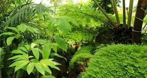 Fundo das plantas verdes Foto de Stock Royalty Free