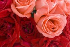 Fundo das rosas imagem de stock