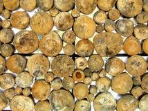 Fundo das x-seções da madeira imagens de stock