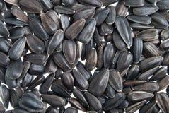 Fundo das sementes de girassol Imagem de Stock Royalty Free