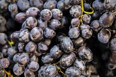 Fundo das uvas do vinho tinto imagens de stock