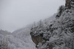 Fundo de árvores geadas no inverno nos Pyrenees Imagens de Stock Royalty Free