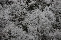 Fundo de árvores geadas no inverno nos Pyrenees Fotografia de Stock Royalty Free