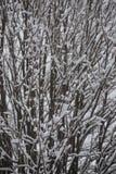 Fundo de árvores geadas no inverno nos Pyrenees Foto de Stock Royalty Free