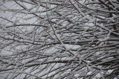 Fundo de árvores geadas no inverno nos Pyrenees Imagem de Stock Royalty Free