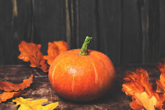Fundo de Autumn Fall com abóboras e as folhas douradas na oxidação Imagens de Stock
