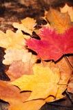 Fundo de Autumn Fall da ação de graças com as folhas coloridas sobre r Fotos de Stock