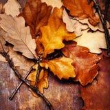 Fundo de Autumn Fall da ação de graças com as folhas coloridas sobre r Fotos de Stock Royalty Free