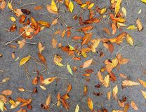 Fundo de Autumn Leaves On Sidewalk colorido imagem de stock royalty free