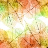 Fundo de Autumn Leaves - textura natural imagens de stock