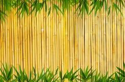 Fundo de bambu Imagem de Stock