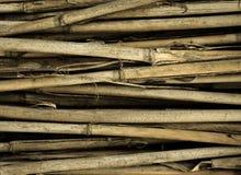 Fundo de bambu Foto de Stock