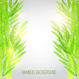 Fundo de bambu da aquarela do vetor com verde Foto de Stock Royalty Free