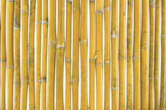 Fundo de bambu da cerca Fotos de Stock