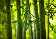 Fundo de bambu da floresta Fotografia de Stock