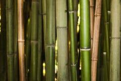 Fundo de bambu da natureza do bosque imagem de stock royalty free