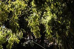Fundo de bambu da natureza do bosque imagens de stock