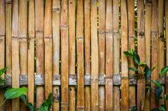 Fundo de bambu da textura da prancha da parede Foto de Stock