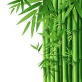 Fundo de bambu de bambu Fotos de Stock