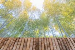 Fundo de bambu do bosque da floresta com tabela de madeira fotografia de stock royalty free