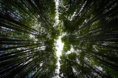 Fundo de bambu do sumário da floresta Imagem de Stock