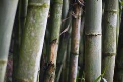 fundo de bambu verde Fotos de Stock