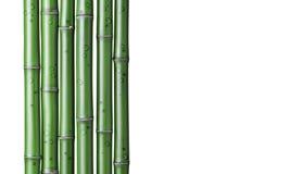 fundo de bambu verde foto de stock royalty free