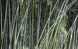 Fundo de bambu verde da textura da cerca, panorama de bambu da textura fotos de stock