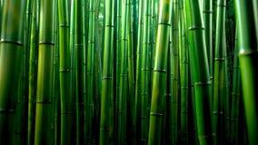 Fundo de bambu verde da textura da floresta, panorama de bambu da textura imagem de stock royalty free
