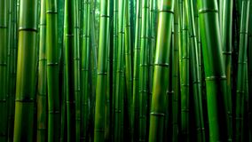 Fundo de bambu verde da textura da floresta, panorama de bambu da textura fotografia de stock