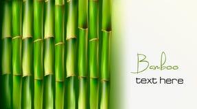 Fundo de bambu. Vetor Fotos de Stock Royalty Free
