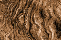 Fundo de Brown com teste padrão da raiz da árvore Fotos de Stock Royalty Free