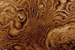 Fundo de Brown com teste padrão da raiz da árvore Imagem de Stock