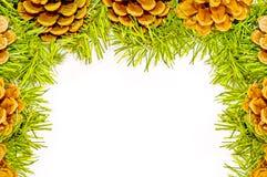 Fundo de Christmass, pinecone natural e ramo verde Foto de Stock