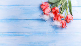 Fundo de Easter ou de mola Ovos decorativos com pena e co Foto de Stock Royalty Free