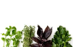 Fundo de ervas diferentes para cozinhar A vista da parte superior Foto de Stock Royalty Free