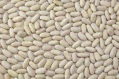 Fundo de feijões brancos secos fotografia de stock royalty free