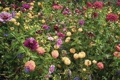 Fundo de flores coloridas na natureza completa imagens de stock royalty free
