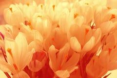 Fundo de flores delicadas das pétalas brancas Foto de Stock