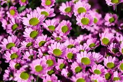 Fundo de flores vívidas coloridas do verão Imagem de Stock Royalty Free