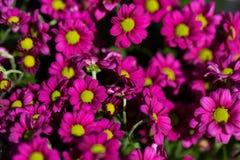 Fundo de flores vívidas coloridas do verão Foto de Stock Royalty Free