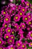 Fundo de flores vívidas coloridas do verão Fotografia de Stock Royalty Free