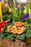 Fundo de flores vívidas coloridas do verão Fotografia de Stock