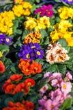 Fundo de flores vívidas coloridas do verão Imagens de Stock
