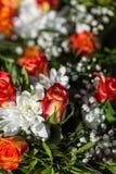 Fundo de flores vívidas coloridas do verão Fotos de Stock Royalty Free