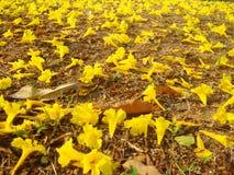 Fundo de Flowere Fotos de Stock