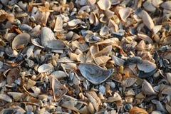 Fundo de fragmentos quebrados da concha do mar no Sandy Beach de Ucrânia do sul Imagem de Stock