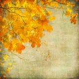 Fundo de Grunge com folhas de outono Imagem de Stock Royalty Free