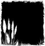 Fundo de Grunge da grama de Pampas ilustração do vetor